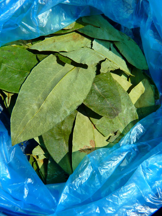 Coca Leaves, Coca, Plant blacknetsales.net
