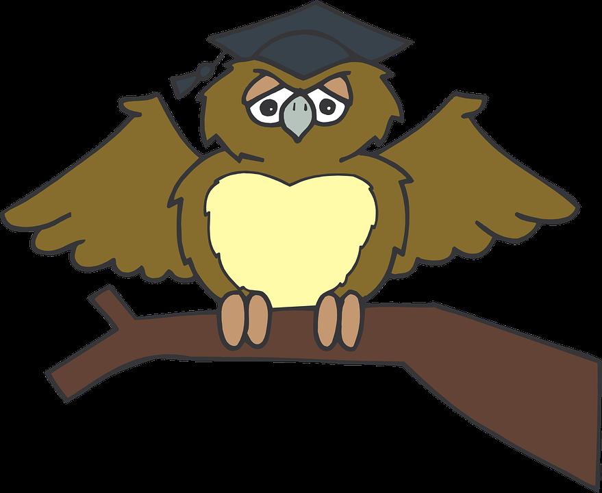 Free vector graphic: Owl, Graduate, Sitting, Tree - Free ...