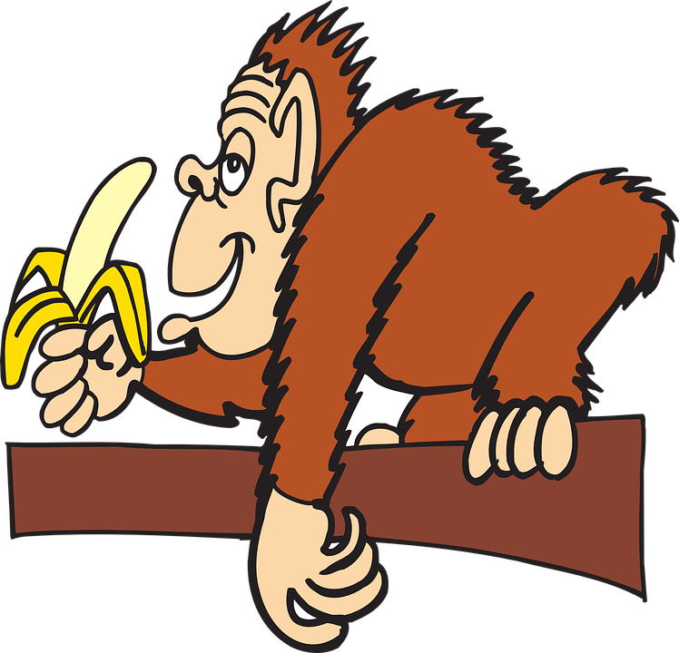 Znalezione obrazy dla zapytania banany i maÅpy