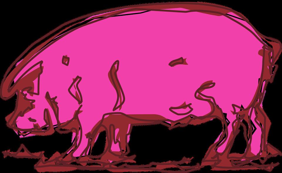 Warna Merah Muda Babi Hewan Gambar Vektor Gratis Di Pixabay