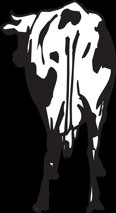 kostenlose vektorgrafik kuh hinten r252ckseite vieh
