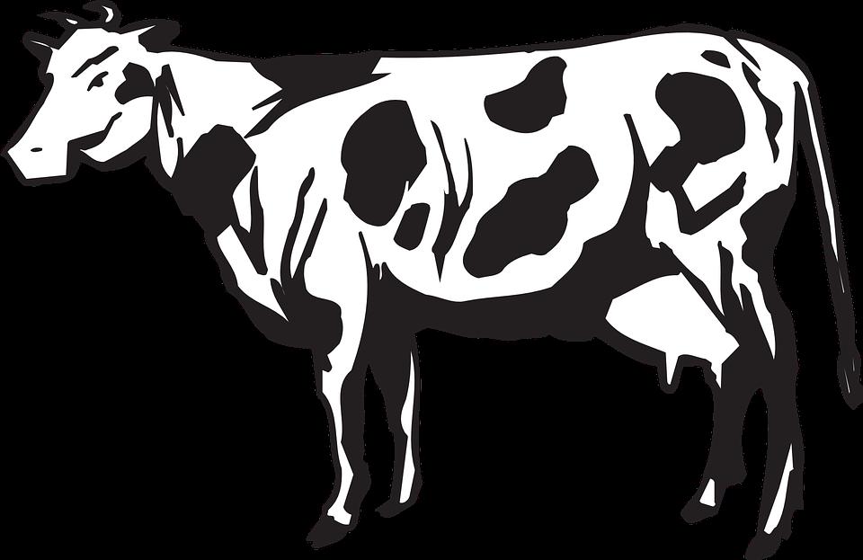 71 Koleksi Gambar Hewan Ternak Hitam Putih Gratis