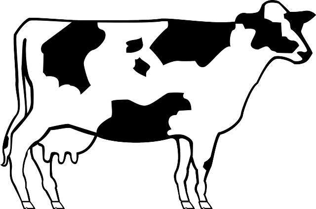 Cow Livestock Cattle Free vector
