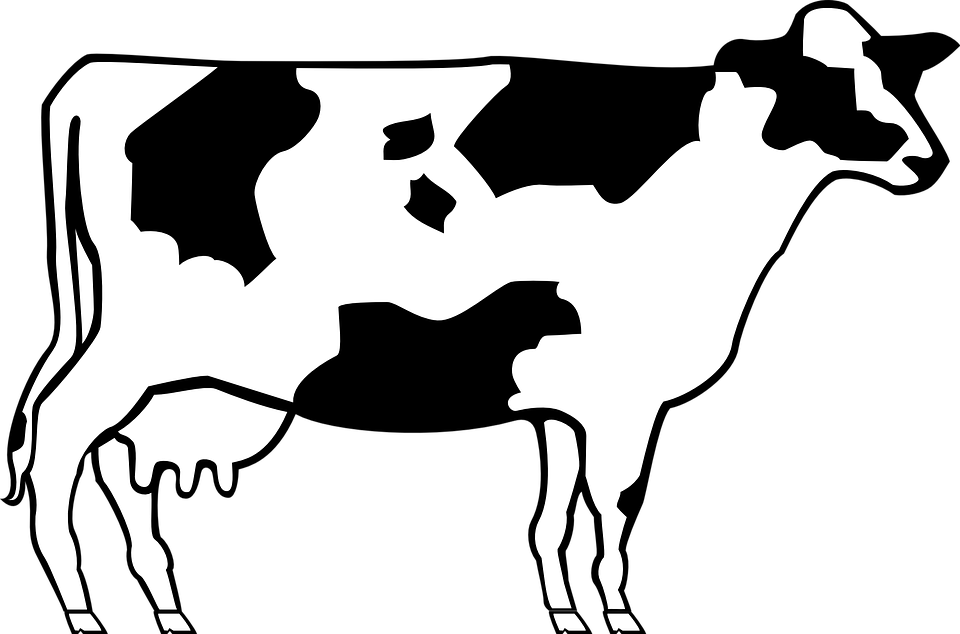 cow livestock cattle free vector graphic on pixabay