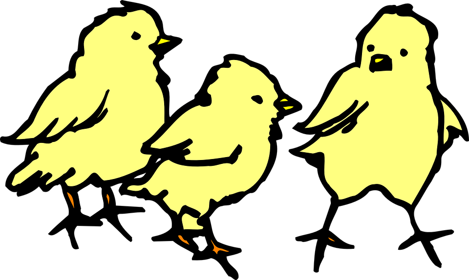 chicks baby yellow free vector graphic on pixabay rh pixabay com baby chick clipart black and white baby chick clip art images