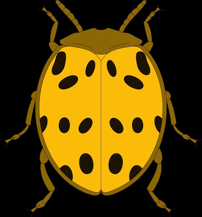 đầu Xem Vàng Màu Miễn Phí Vector Hình ảnh Trên Pixabay