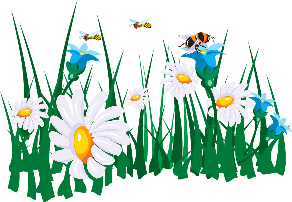 Charming Flowers Bees Garden Green Grass White Daisy