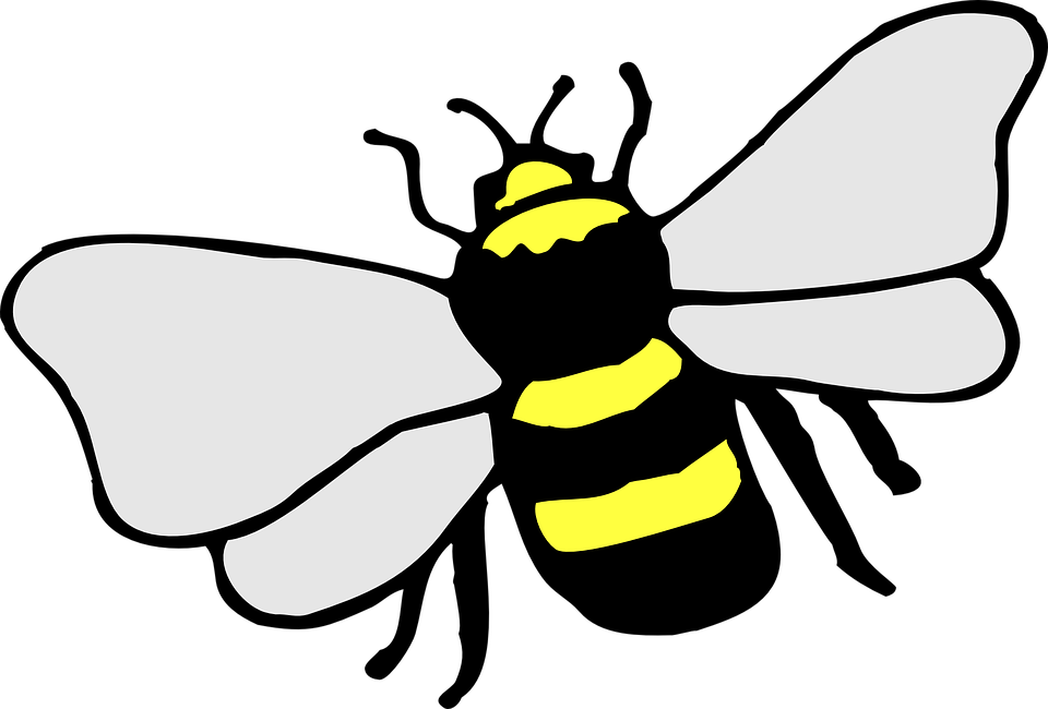 Bee Insect Stripes Yellow Black Wings Macro