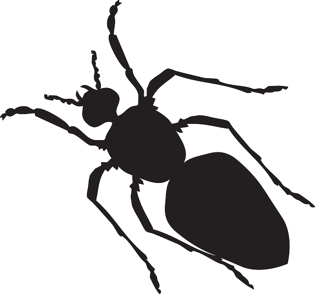 Free Vector Graphic: Black, Silhouette, Ant, Body, Shape