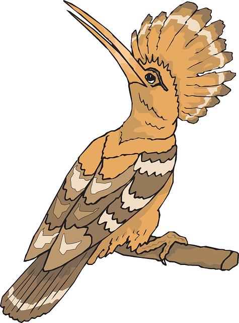 free vector graphic bird hoopoe looking back sight