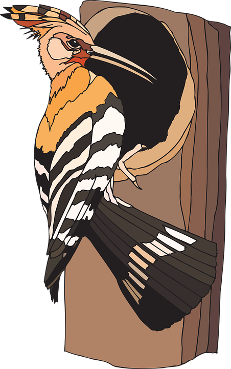 woodpecker bird sitting  u00b7 free vector graphic on pixabay woodpecker clip art free pileated woodpecker clipart