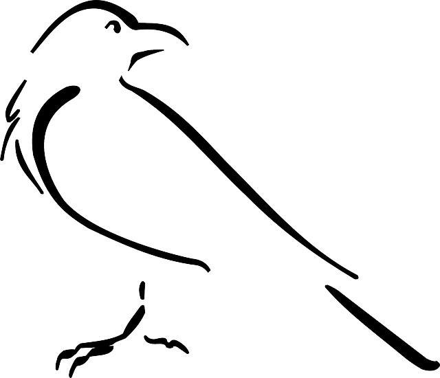 Drawing Lines With Svg : Free vector graphic crow bird outline drawing