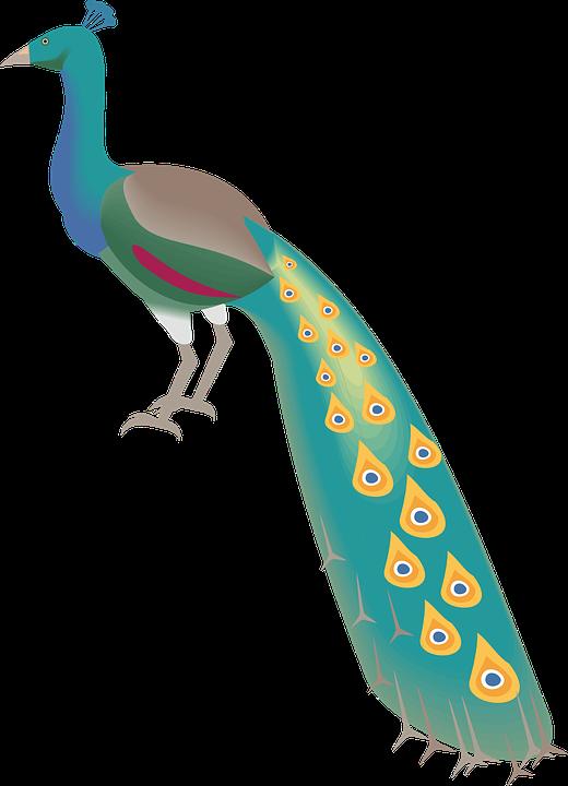 540 Gambar Kartun Binatang Burung Merak HD
