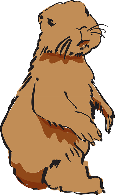how to draw beaver pelt