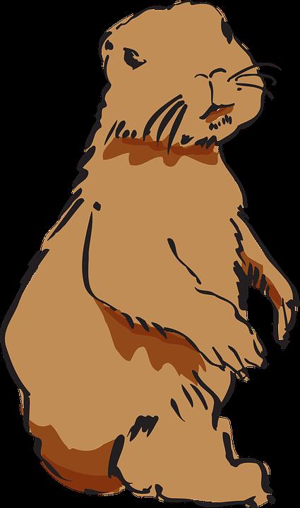 Free Vector Graphic Beaver Beaver Fur Beaver Pelt