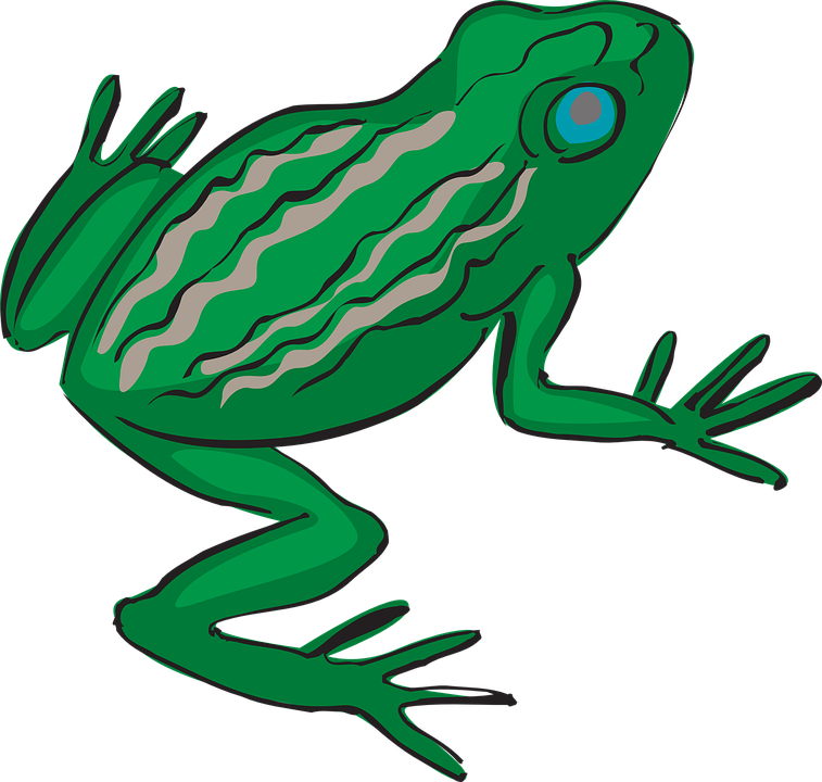 free vector graphic frog  amphibian  tropical free rainforest animals clipart black and white rainforest animal clip art black and white