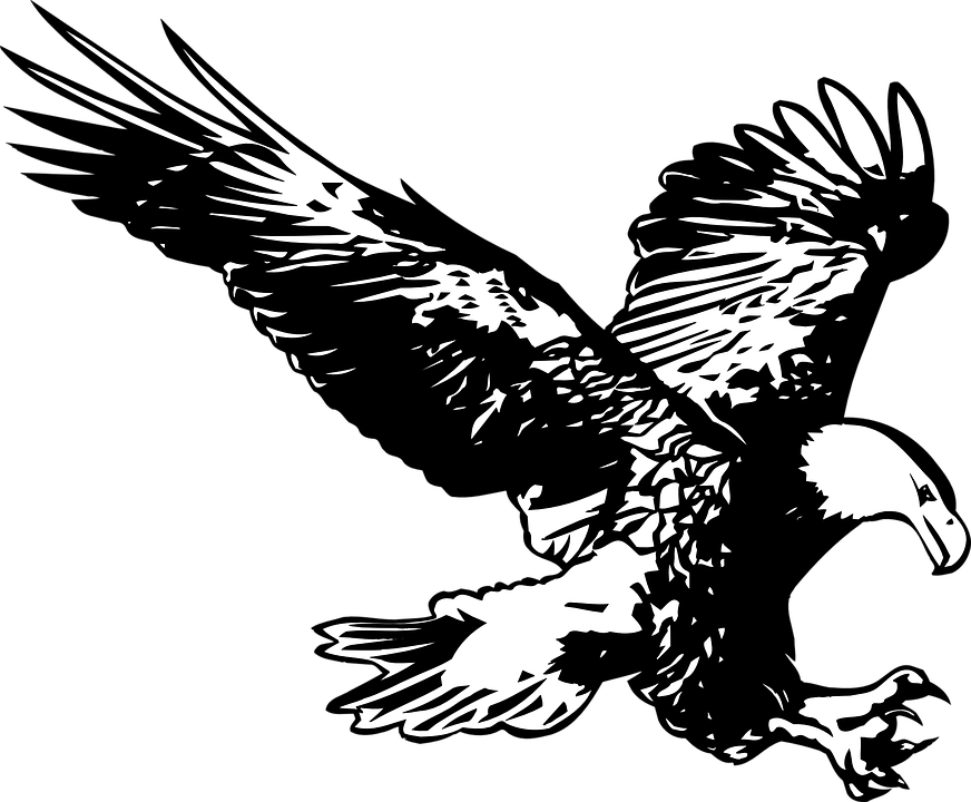 Eagle black and white birds birds of prey flight