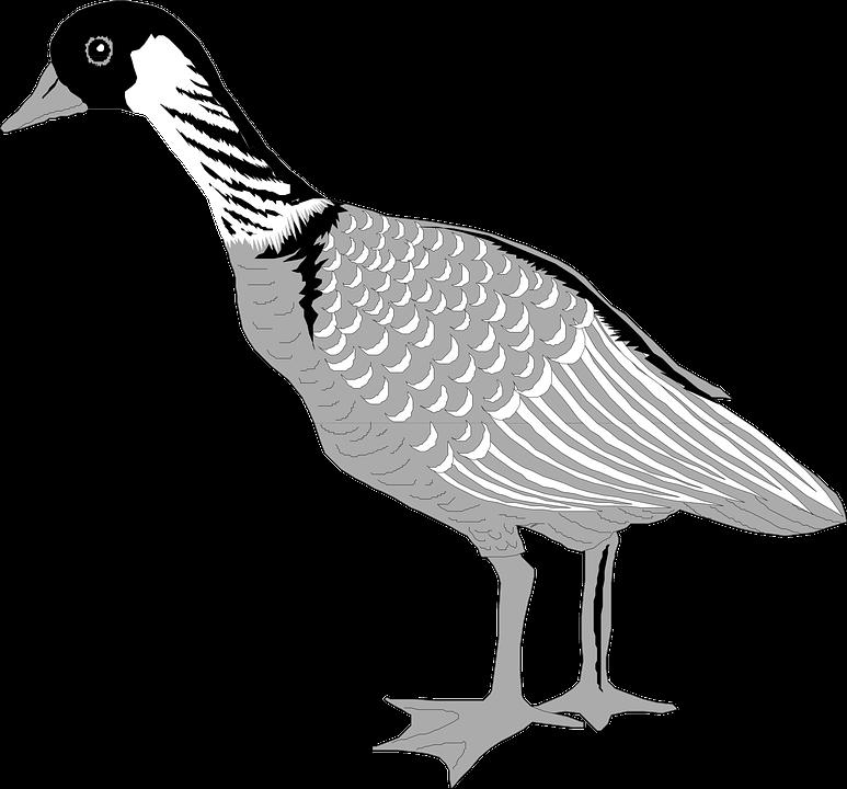 Goose Bird Waterfowl · Free vector graphic on Pixabay