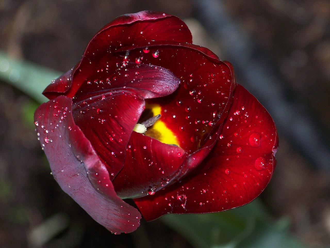 梦见花正在开放 梦见满院的鲜花开放