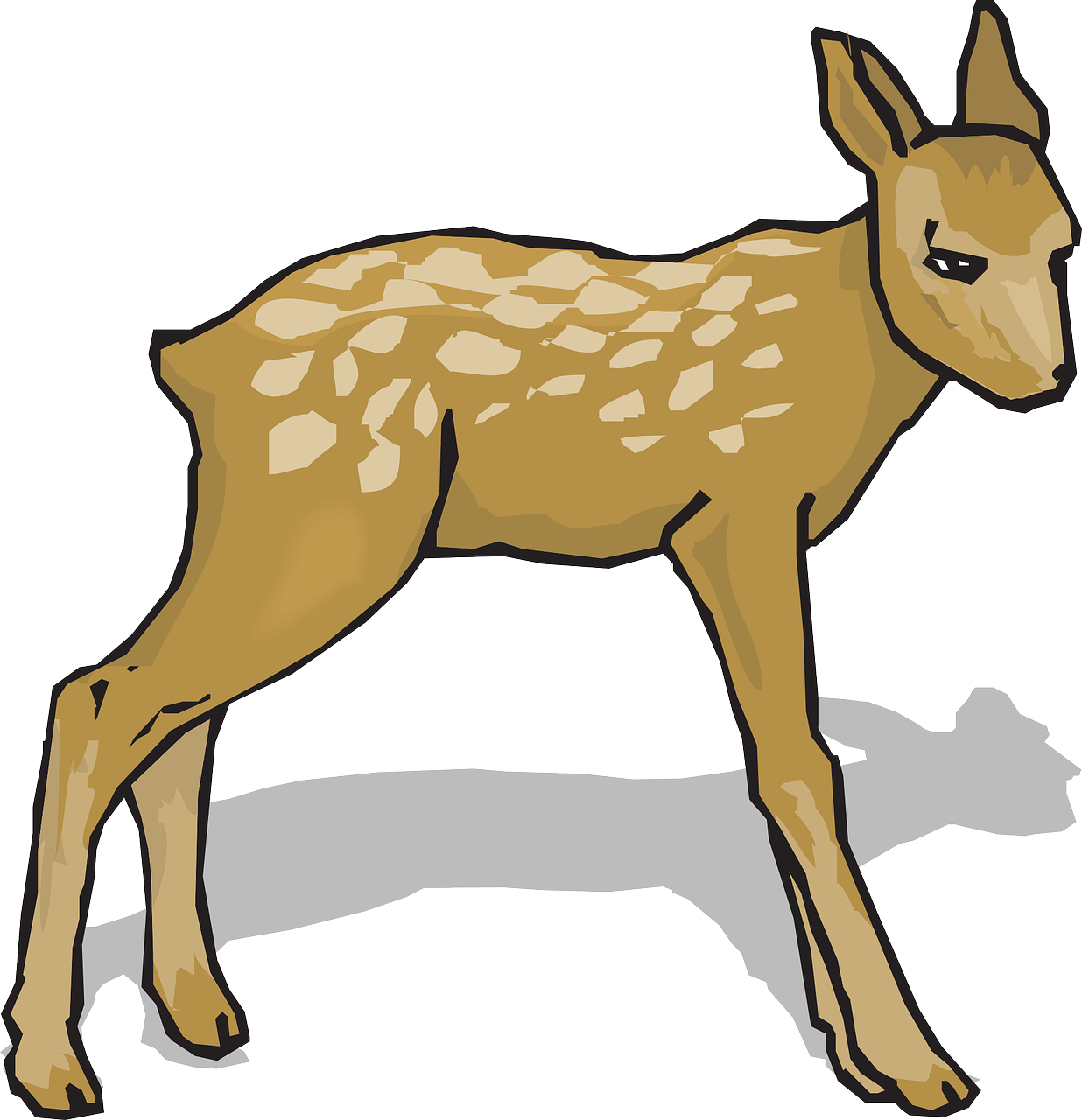 Fawn Animal Deer Free Vector Graphic On Pixabay