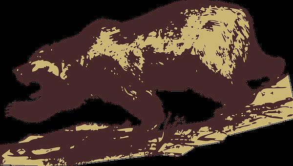 Orso, Attaccando, Mammifero, Selvatici