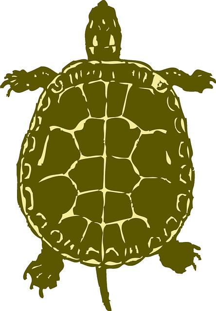 kostenlose vektorgrafik schildkröte nach oben grün