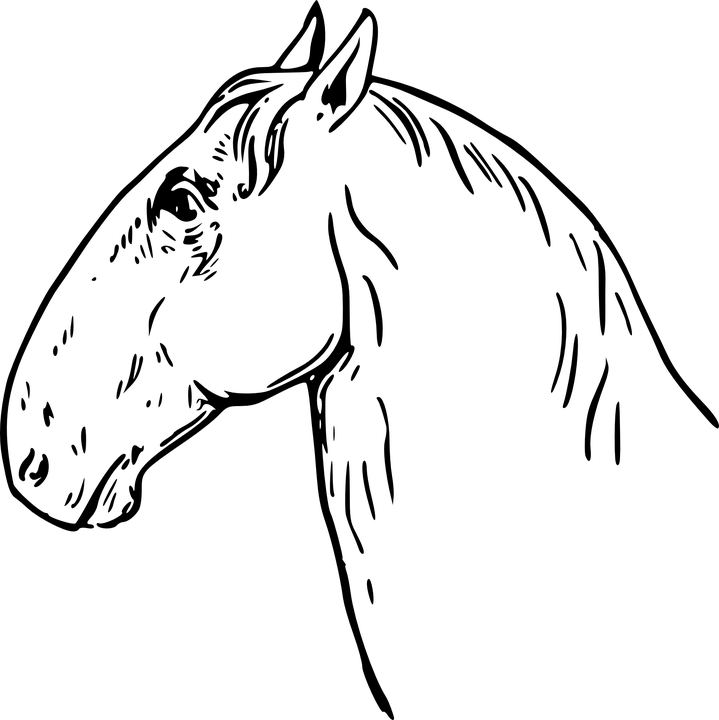картинка головы коня для костюм цыпленка