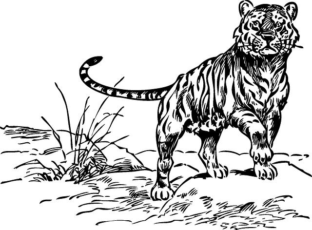 Kenya Animals Coloring Pages : Free vector graphic tiger animal baby small mammal