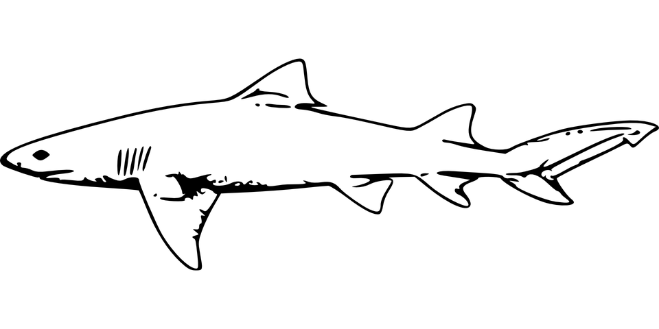 Köpekbalığı Hayvan Deniz Pixabayda ücretsiz Vektör Grafik