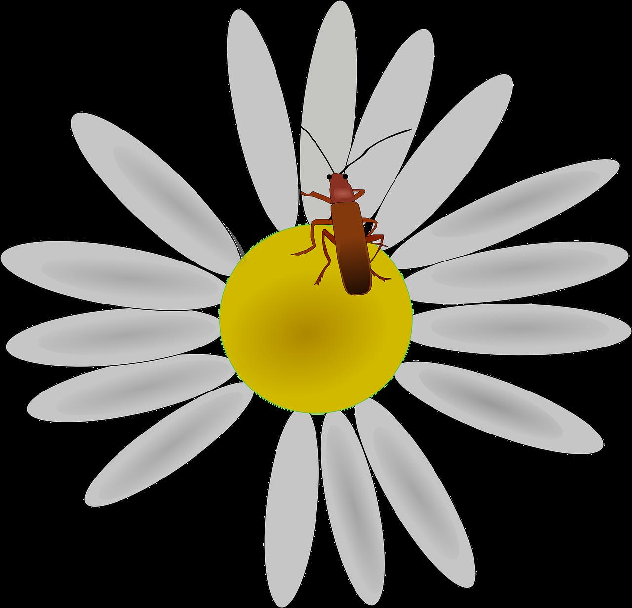 так картинки к слову цветочек что делитесь