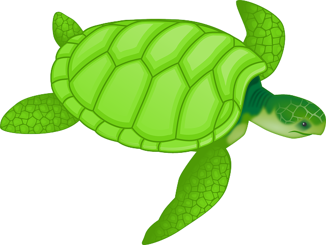 Tortoise green reptiles · free vector graphic on pixabay