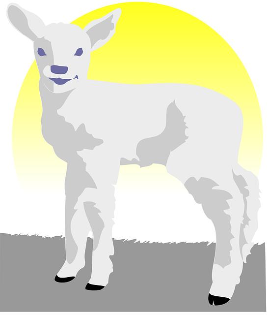 Free Vector Graphic Lamb Sheep Young Sheep Free Image