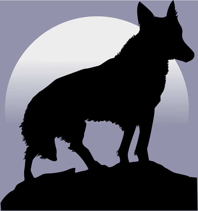 wolf silhouette moon howl howling light wildlife