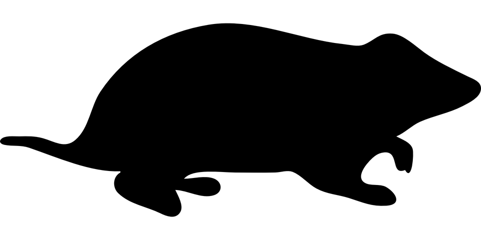 škrečok čierna mačička