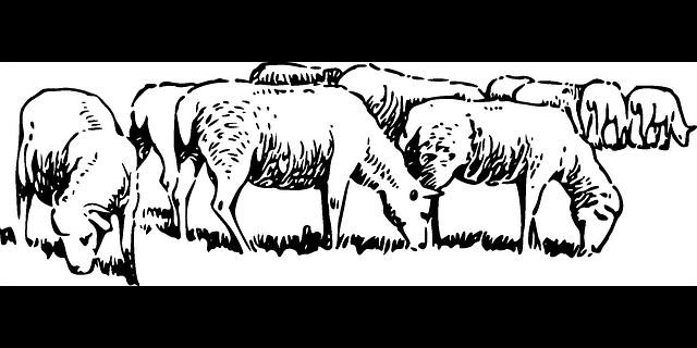 Free vector graphic: Animals, Barn, Farm, Sheep, Grazing ...