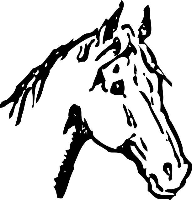 Kuda Bulu Tengkuk Stallion Gambar Vektor Gratis Di Pixabay