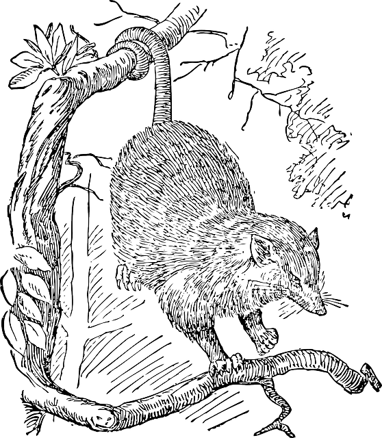 free possum coloring pages - photo#26
