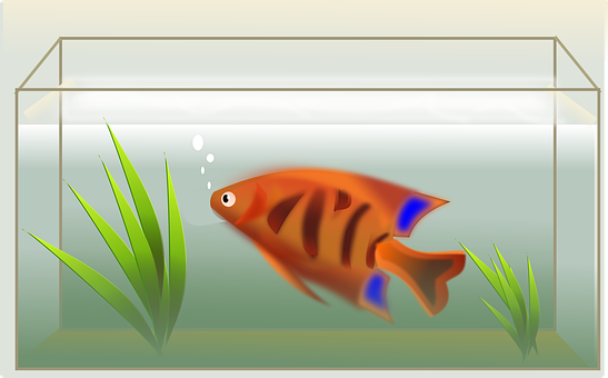 Fish, Tank, Swimming, Decoration, Water