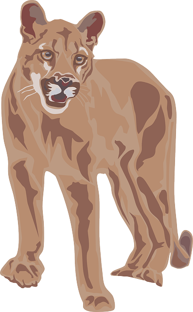 free vector graphic cougar mountain lion wild free