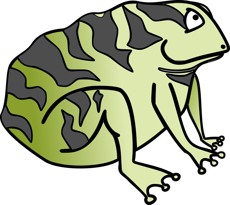 toad frog green free vector graphic on pixabay rh pixabay com