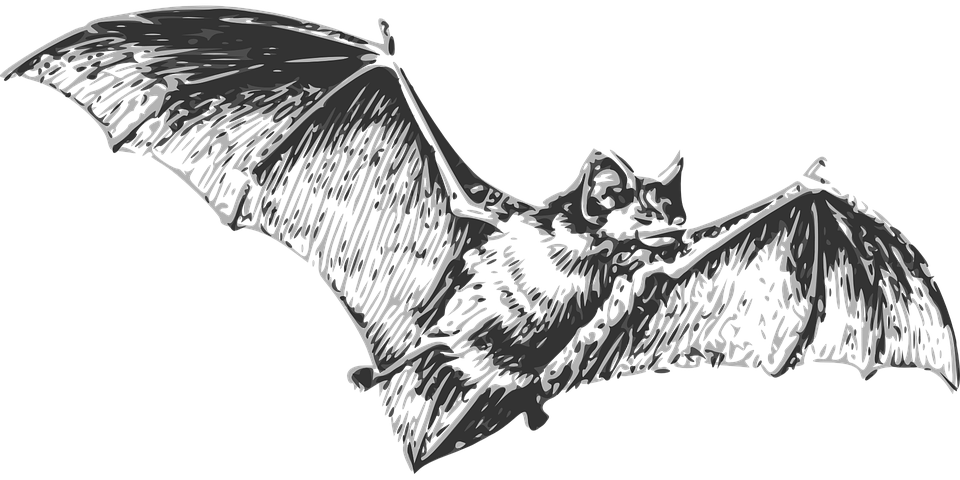 Bat Flying Wings U00b7 Free Vector Graphic On Pixabay