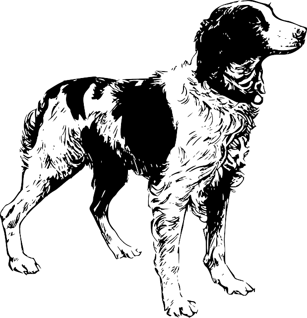 Free Vector Graphic Dog Pet Animal Breed Brittany