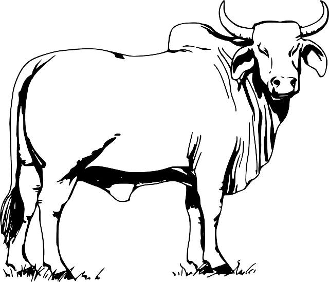 Bull Animal Cow Free Vector Graphic On Pixabay