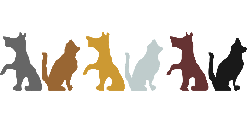 Animals, Pets, Border, Dog, Cats, Design, Color