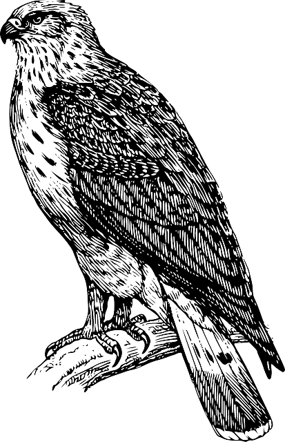 kostenlose vektorgrafik vogel adler falke feder natur. Black Bedroom Furniture Sets. Home Design Ideas