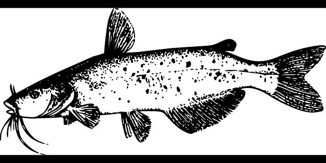 Catfish Fish Tail 183 Free Vector Graphic On Pixabay
