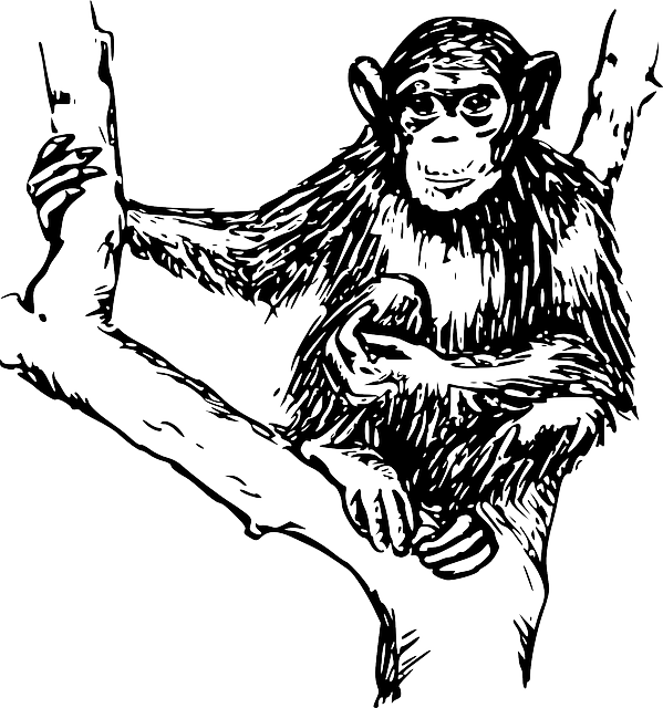 Free Vector Graphic Chimpanzee Animal Mammal Primate