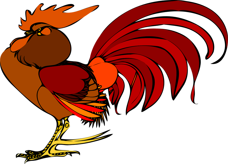 rooster chicken bird free vector graphic on pixabay rooster chicken bird free vector