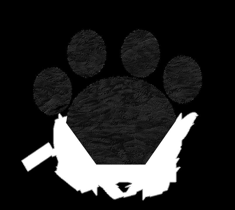 Čierna mačička nohy