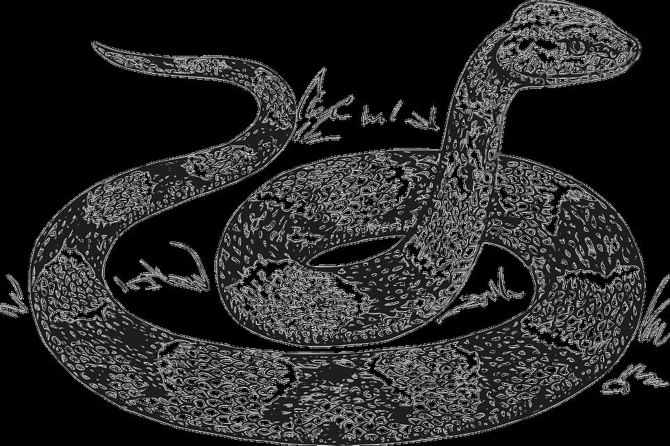 Snake Head Raised Free vector